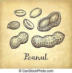 Ink sketch of peanuts