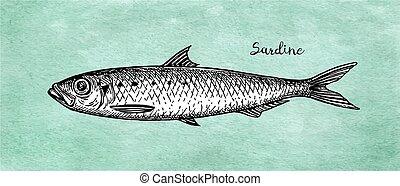 Ink sketch of pilchard. - Ink sketch of sardine. Small...