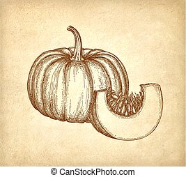 Ink sketch of pumpkin