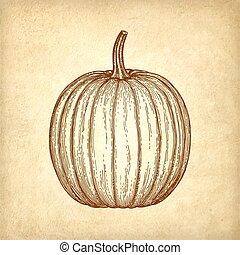 Ink sketch of pumpkin