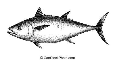Ink sketch of tuna.