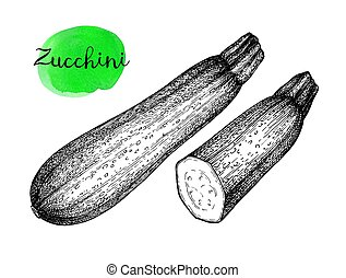 Ink sketch of zucchini. - Zucchini. Ink sketch isolated on...