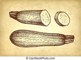 Ink sketch of zucchini. - Zucchini. Ink sketch on old paper...