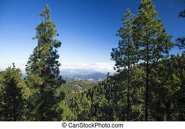 Inland Central Gran Canaria, Las Cumbres, the highest areas...