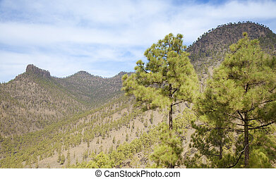 Inland Gran Canaria, Nature reserve Pilancones, sunny day in...