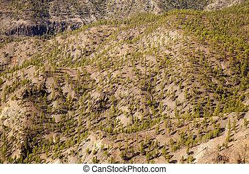 Inland Gran Canaria, Nature reserve Pilancones, sunny day in...