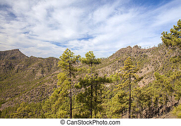 Inland Gran Canaria, Nature reserve Pajonales, sunny day in...