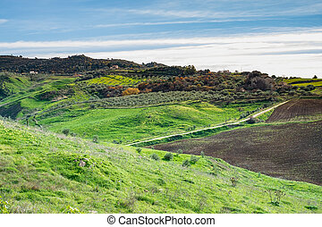 Inland Sicilian landscape with olive grove, pasture and...