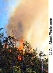 inmenso, bushfire, llamas