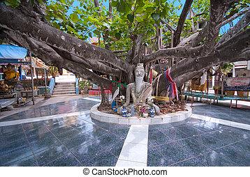 inmenso, koh, phra, árbol, yai, tailandia, templo, wat, samui