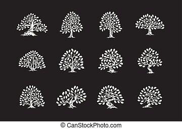 inmenso, planta, silueta, sagrado, roble, set., árbol,...