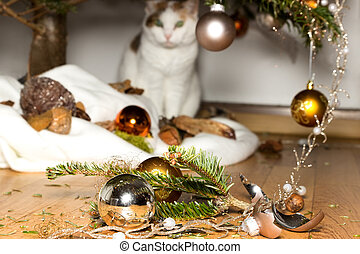 Innocent cat - A cat looks innocent at broken christmas...
