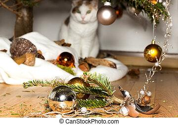 Innocent cat - A cat looks innocent at broken christmas...