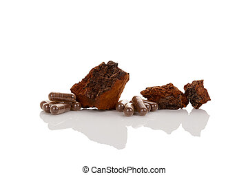 Inonotus obliquus. Chaga mushroom. - Inonotus obliquus,...