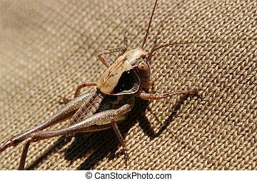 Inquisitive grasshopper