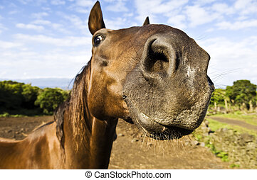 Inquisitive horse - Horse nostril