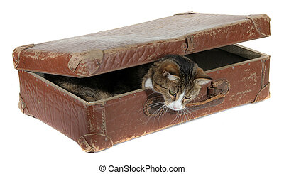 inquisitively pet in old suitcase