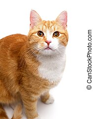 inquisitively tom cat