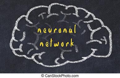 inschrift, neuronal, gehirn, tafel, menschliche , drawind, vernetzung