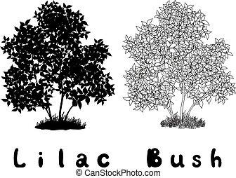 inscripciones, contornos, silueta, arbusto, lila
