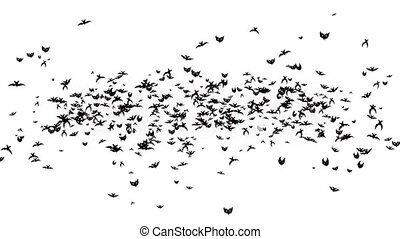 Inscription Halloween turns into a flock of bats. White ...