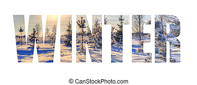 Inscription winter on the background of a frosty day with Christmas trees and the sun