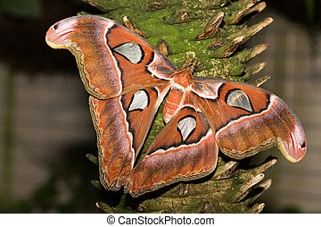 insect 001 butterfly