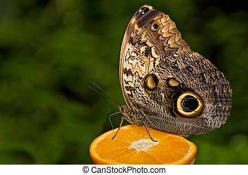 insect 003 butterfly
