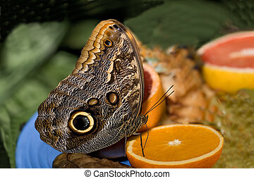 insect 005 butterfly