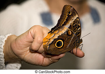 insect 012 butterfly hand