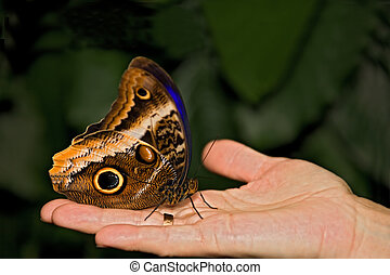 insect 016 butterfly hand