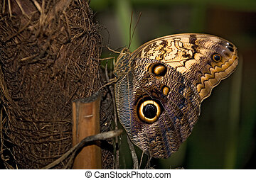 insect 018 butterfly