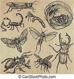 INSECT - An hand drawn vector pack, line art