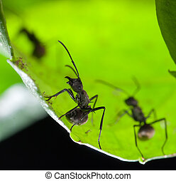ant on green leaf
