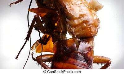 insect, benen