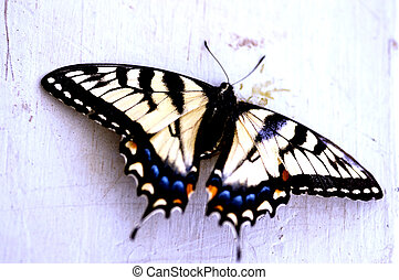 Insect - Butterfly