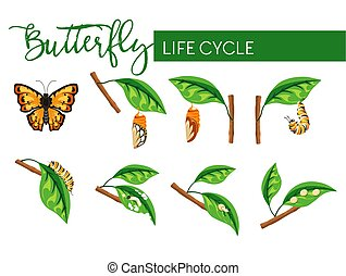 Insect butterfly life cycle larva transformation isolated...