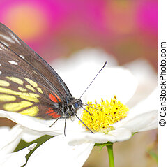 insect butterfly on flower