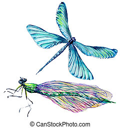 Insect dragonfly set in a watercolor style isolated.