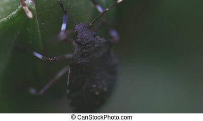 Insect feeding from fresh stem macro footage