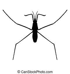 insect in magnifier.water strider. Gerridae. GERRIS...