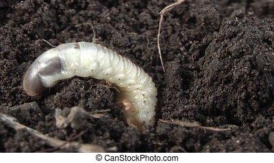 larva Insect .film . Part 2.