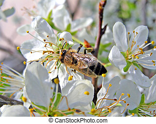 insect on flower plum