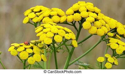 insect, op, bloem