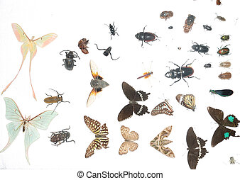 insect specimen - animal insect collection specimen isolated...