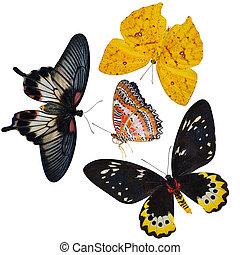 insect, verzameling, van, vlinder, is