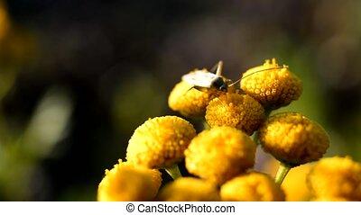 insecte, bogue