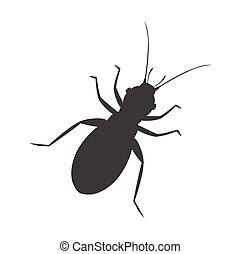 insecte, silhouette, pou