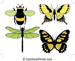 insecten, illustraties, anders, set, vector