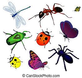 insecten, set, gevarieerd